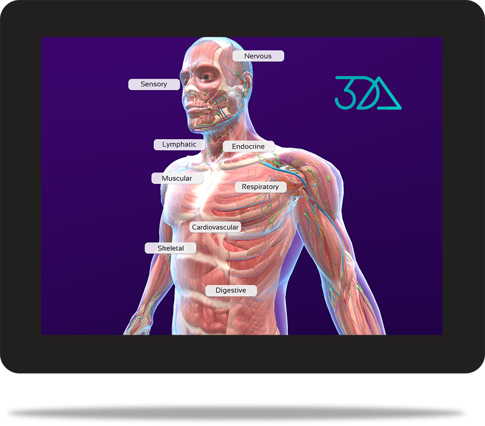 3DAnatomica medical model on handheld device