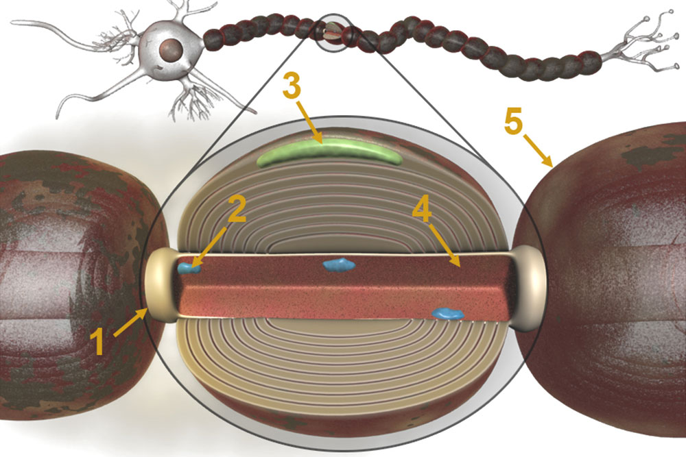 3DAnatomica Applications, Education