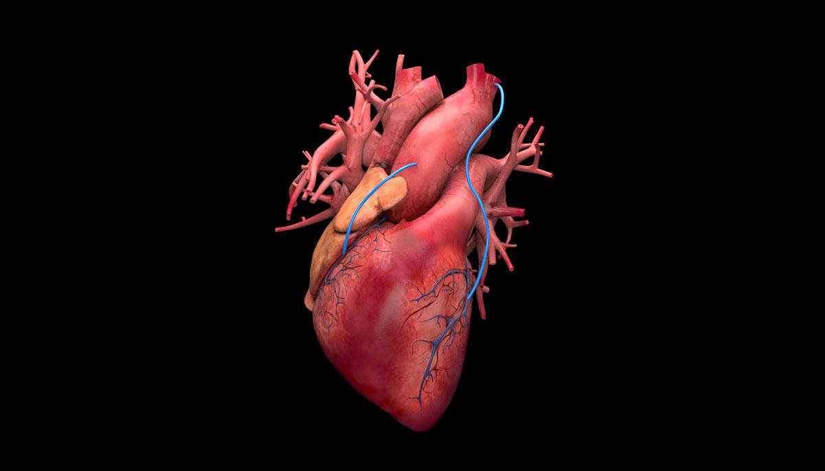 3DAnatomica, 3D heart render